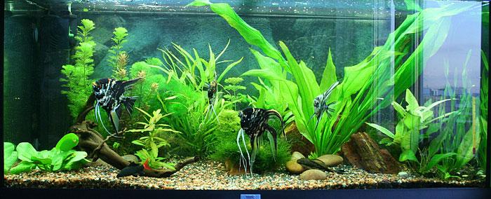 Дизайн аквариума 200 литров фото